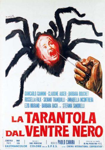 tarantola-dal-ventre-nero